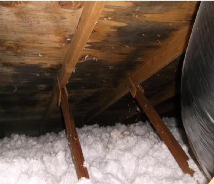 Attic Mold in Salem, Oregon After
